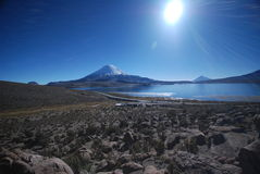 Lauca national Park - Chile Royalty Free Stock Photo