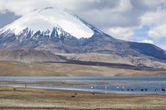 Lauca National Park, Chile. Chungara Lake and Parinacota volcano, Lauca National Park, Chile Stock Photos