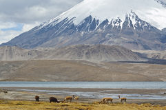 Lauca National Park, Chile. Chungara Lake and Parinacota volcano, Lauca National Park, Chile Stock Images