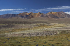 Lauca National Park, Chile Royalty Free Stock Photo