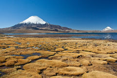 Lauca national park Stock Image
