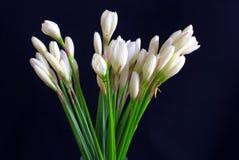 Lauch-geformte Orchidee Stockbilder