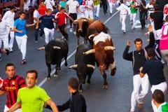 Laufen der Stiere stockbilder