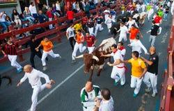 Laufen der Stiere stockfotografie