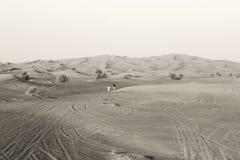 Laufen in die Wüste Lizenzfreie Stockbilder