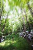 Laufen durch das Holz Stockbild