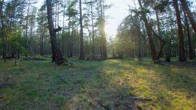 Laufen durch das Holz stock video footage