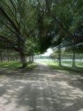 Laufen durch den Park Stockfoto