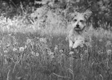 Laufen in Feld Stockfotografie