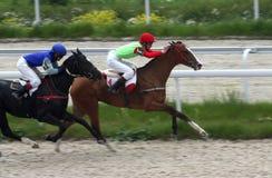 Laufen mit zwei Pferden Stockfoto