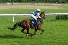 Laufen Sie für 3-jährige arabische Pferdegruppe IV am 5. September 2015 in Breslau, Polen Stockfotografie