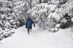Laufen Sie zum Wald Stockbild