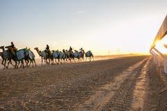 Laufen von Kamelen in Abu Dhabi lizenzfreie stockfotos
