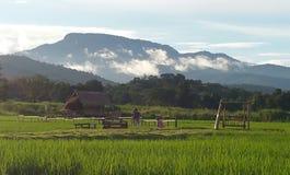 Laufende Ansicht über Huay Tueng Tao stockfotografie