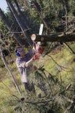 Holzfäller mit Kettensäge stockbilder