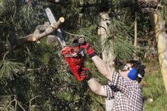 Holzfäller in der Tätigkeit Lizenzfreies Stockbild