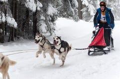 Laufende heisere Hunde an einem Hundeschlitten laufen Lizenzfreie Stockbilder