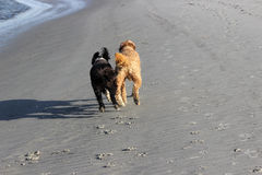 Laufende Hunde Lizenzfreie Stockfotografie