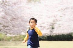 Laufende japanische Jungen- und Kirschblüten Stockfotos