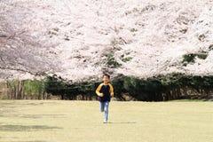 Laufende japanische Jungen- und Kirschblüten Stockbild