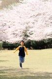 Laufende japanische Jungen- und Kirschblüten Stockfoto