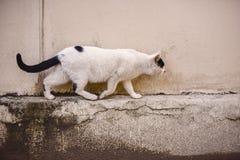 Laufende Katze auf der Straße Lizenzfreies Stockfoto