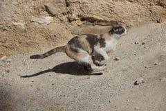 Laufende Katze in Jordanien Lizenzfreie Stockfotografie
