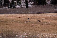 Laufende Pferde Stockfoto