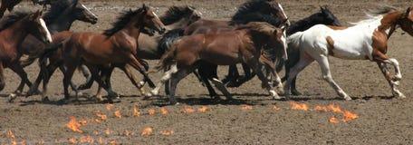 Laufende Pferde und Feuerkreise Lizenzfreie Stockbilder