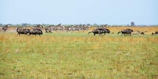 Laufende wild lebende Tiere Stockfotos