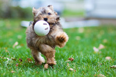 Laufender Hund Stockfotografie