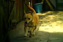 Laufender Hund Lizenzfreie Stockbilder