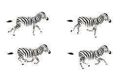 Laufender Zebra Lizenzfreie Stockfotografie