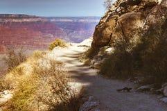 Laufendes Eichhörnchen auf einem Weg in Grand Canyon Stockfotografie