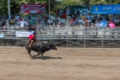 Laufendes Festival 2015 des Büffels die Tradition von Thailand Stockbild
