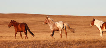 Laufendes Pferd stockfotografie