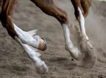Laufendes Pferd Stockfoto