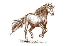 Laufendes und tänzelndes Pferdeskizzenporträt Stockbilder