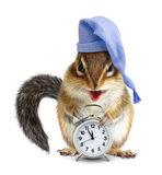 Laughable animal chipmunk with clock and sleeping hat Stock Image