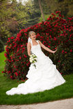 Laughing bride funny red roses. Young bride is laughing and standing in front of nice red roses and holding a nice yellow roses bouquet in her hands. she starts Royalty Free Stock Image