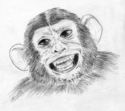 Laughing chimp. Portrait of a big eyed chimpanzee laughing. Pencil drawing, sketch Royalty Free Stock Photo