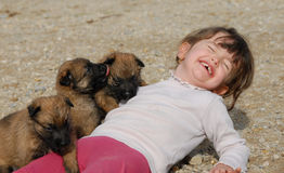 Laughing girl and puppies. Laughing little girl and young puppies purebred belgian shepherds Stock Photos