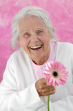 Laughing Great Grandmother. With a pink Gerbera flower, photographed on a pink background. Woman in her eighties Stock Photos