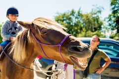 Free Laughing Horse Stock Photos - 76755403