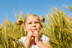 Laughing kid in sunny wheat field Royalty Free Stock Image