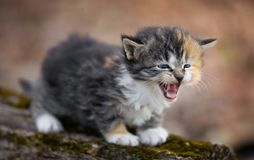 Laughing kitten. In the green grass Stock Images