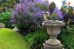 Laughing kookaburra, scientific name Dacelo novaeguineae, sitting like a statue in a flower garden. Laughing kookaburra, scientific name Dacelo novaeguineae Royalty Free Stock Photo
