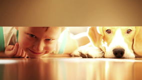 Laughing little boy with his best friend beagle dog under the bed stock video