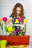 Laughing little girl watering tulips flower Stock Images