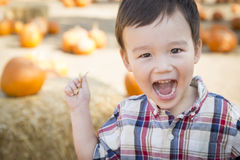 Laughing Mixed Race Young Boy Having Fun at the Pumpkin Patch royalty free stock photo
